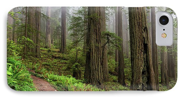 Magical Forest IPhone Case by Scott Warner
