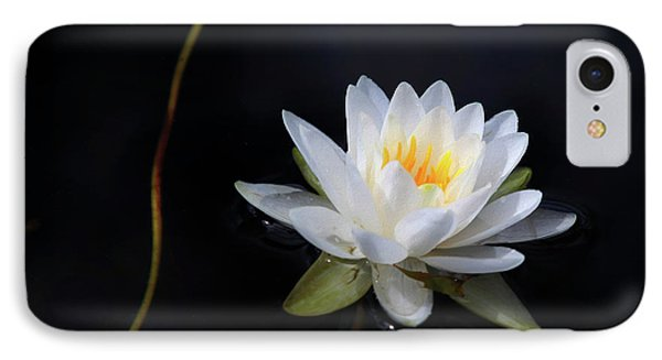 IPhone Case featuring the photograph Magical Water Lily by Michelle Wiarda