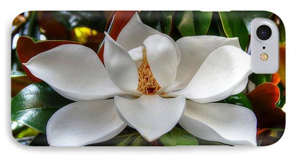 Magnolia Bloom IPhone Case by Ronda Ryan