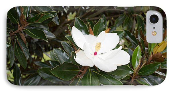 Magnolia Blossom IPhone Case by Linda Geiger