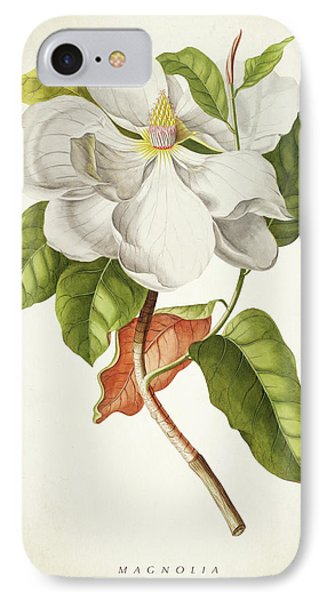 Magnolia Botanical Print IPhone Case by Aged Pixel