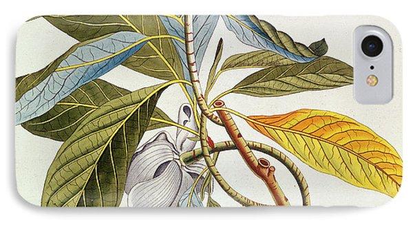 Magnolia Glauca IPhone Case by German School