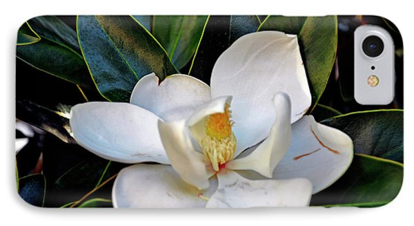 IPhone Case featuring the photograph Magnolia by Helen Haw