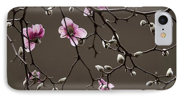 Magnolias In Bloom IPhone Case by Rob Amend