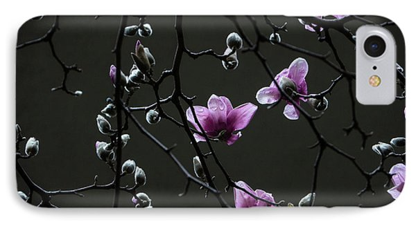 Magnolias In Rain IPhone Case by Rob Amend