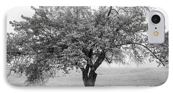 IPhone Case featuring the photograph Maine Apple Tree In Fog by Ranjay Mitra