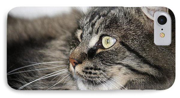 Maine Coon Cat Phone Case by Mary-Lee Sanders