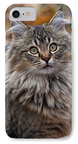 Maine Coon Cat IPhone Case by Rona Black