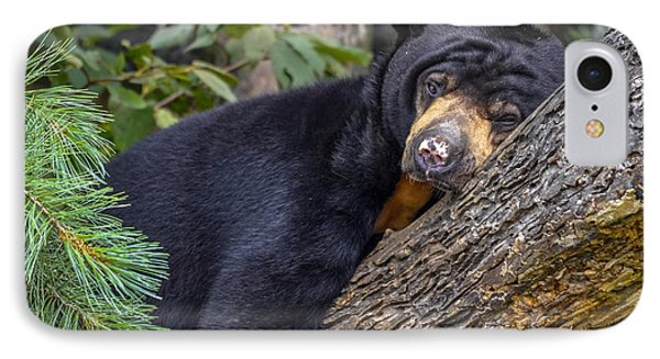 IPhone Case featuring the photograph Malayan Sun Bear by Brian Stevens