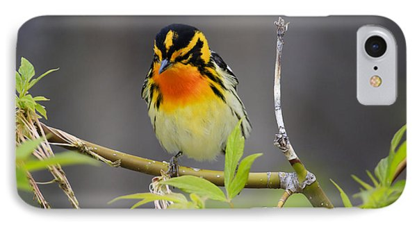 Male Blackburnian Warbler IPhone Case by Gary Hall