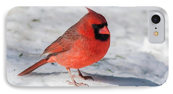 Male Cardinal In Winter IPhone Case by Kenneth Cole