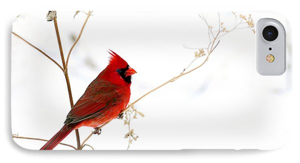Male Cardinal Posing In The Snow IPhone Case by Randall Branham