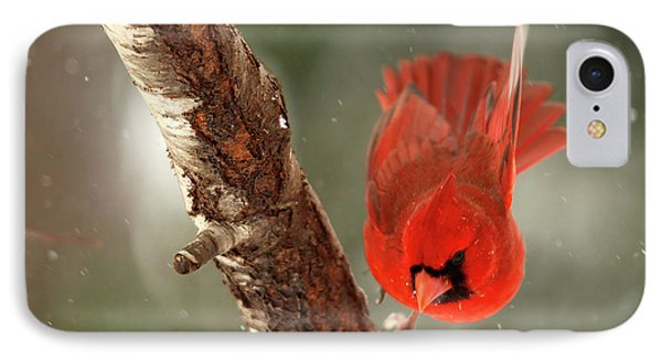 IPhone Case featuring the photograph Male Cardinal Take Off by Darren Fisher