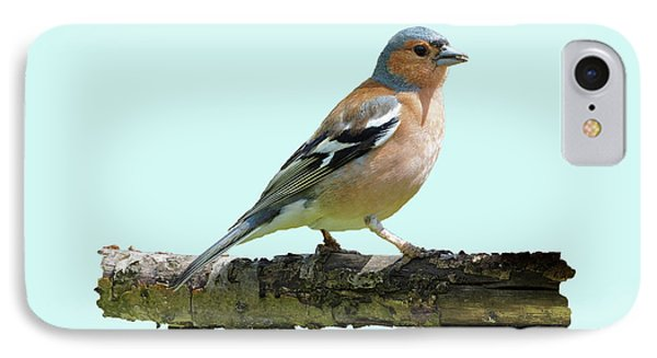 Male Chaffinch, Blue Background IPhone Case by Paul Gulliver