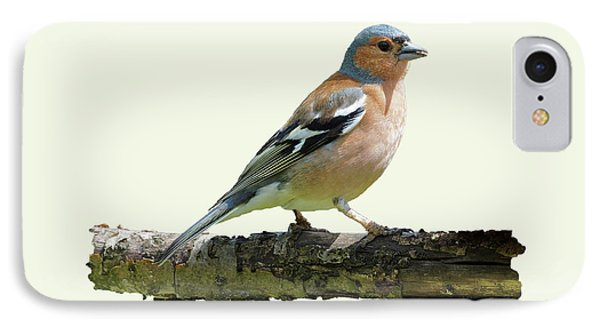 Male Chaffinch, Cream Background IPhone Case by Paul Gulliver