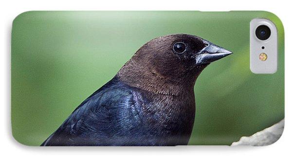 Male Cowbird IPhone Case