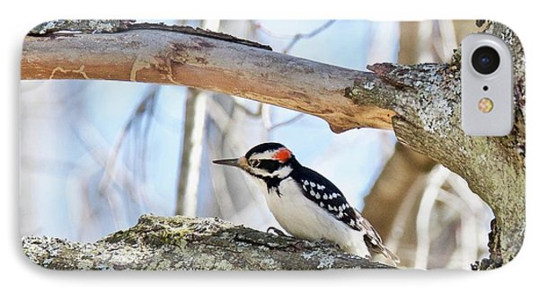 IPhone Case featuring the photograph Male Downey Woodpecker 1112 by Michael Peychich