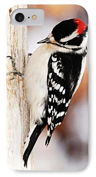 Male Downy Woodpecker 3 Phone Case by Larry Ricker