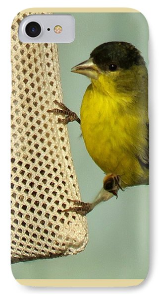 Male Goldfinch On Sock Feeder IPhone Case