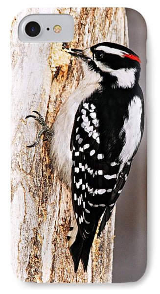 Male Hairy Woodpecker Phone Case by Larry Ricker