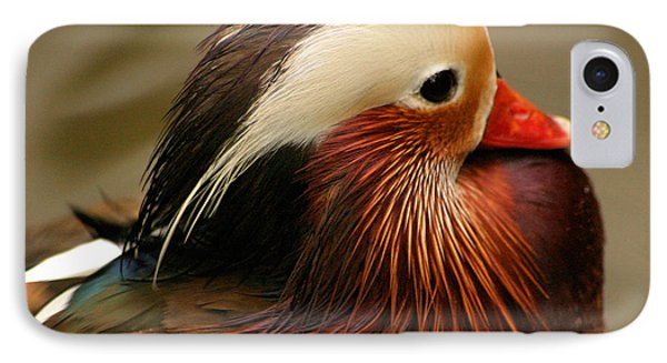 Male Mandarin Duck China IPhone Case by Ralph A  Ledergerber-Photography
