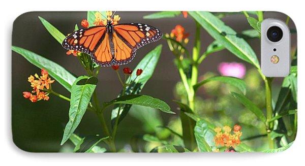 Male Monarch Butterflies IPhone Case