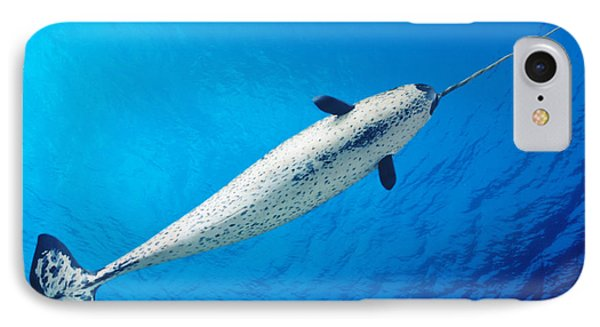 Male Narwhal Phone Case by Dave Fleetham - Printscapes