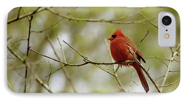 Male Northern Cardinal Phone Case by Michael Peychich