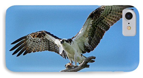 Male Osprey IPhone Case