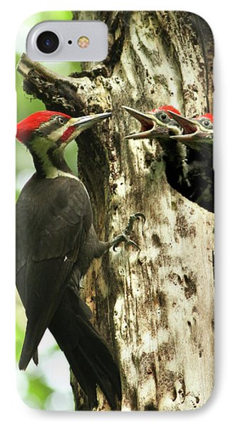Male Pileated Woodpecker At Nest IPhone Case by Mircea Costina Photography