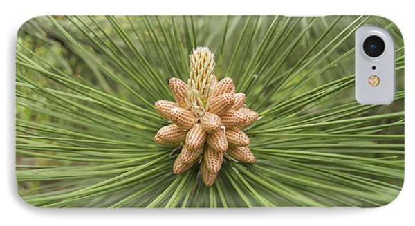 Male Pine Cones  Phone Case by Michael Peychich