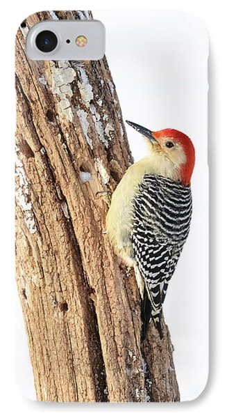 Male Red-bellied Woodpecker IPhone Case by Paul Miller