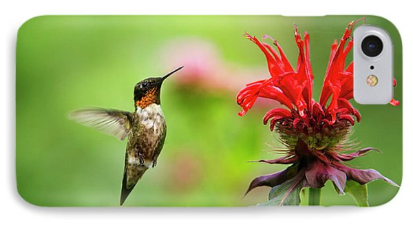 Male Ruby-throated Hummingbird Hovering Near Flowers IPhone 7 Case