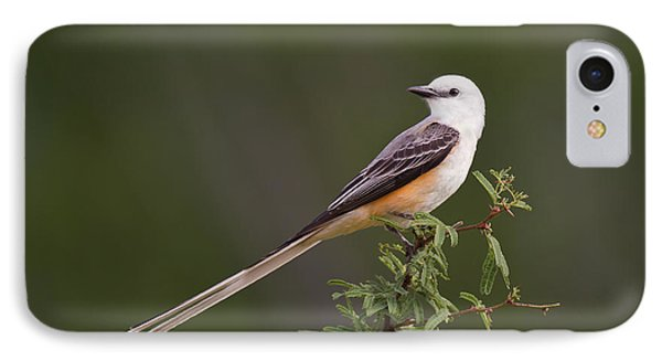 Male Scissor-tail Flycatcher Tyrannus Forficatus Wild Texas IPhone Case