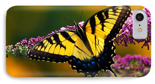 Male Tiger Swallowtail Butterfly On IPhone Case by Panoramic Images