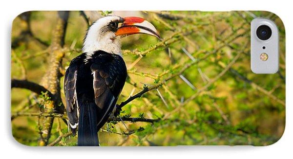 Male Von Der Decken's Hornbill IPhone Case by Adam Romanowicz