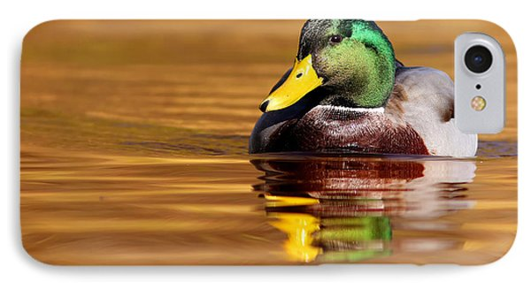 Mallard Drake In The Golden Water IPhone Case