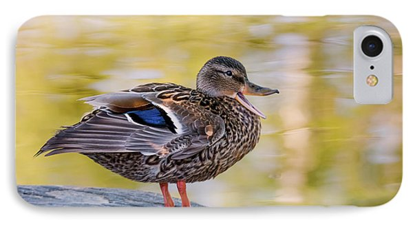 Mallard Duck IPhone Case