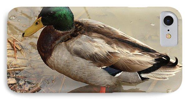 IPhone Case featuring the photograph Mallard Duck by Kim Henderson