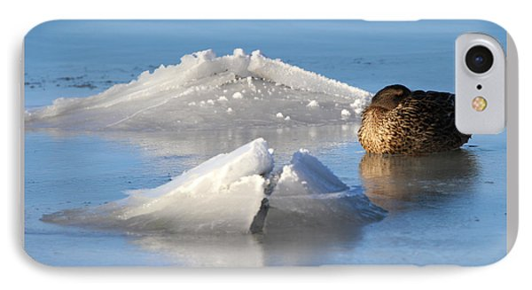 Mallard Duck Mount Sinai New York IPhone Case
