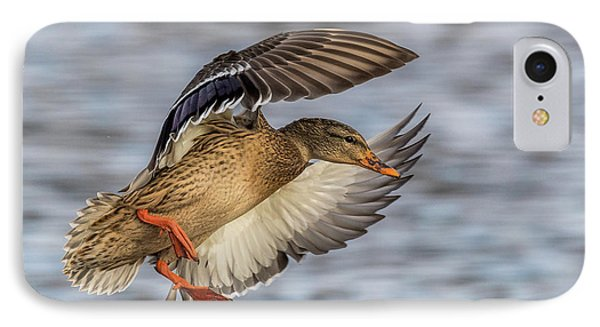 Mallard With Cupped Wings IPhone Case by Paul Freidlund