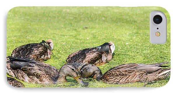 Mallards Coming Up For Air IPhone Case by Edward Peterson
