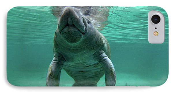 Manatee Breathing IPhone Case by Tim Fitzharris