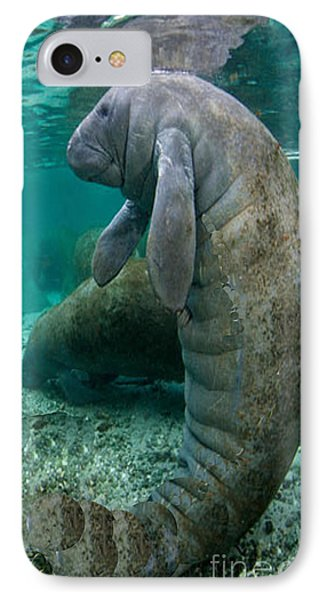 Manatee In Crystal River Florida IPhone Case by Merton Allen