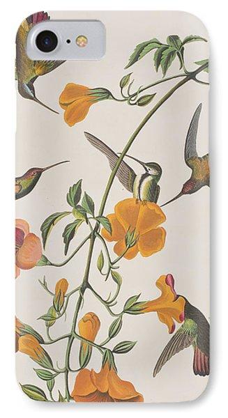 Mango Humming Bird IPhone Case by John James Audubon