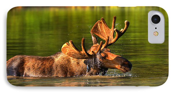Many Glacier Moose In The Morning IPhone Case