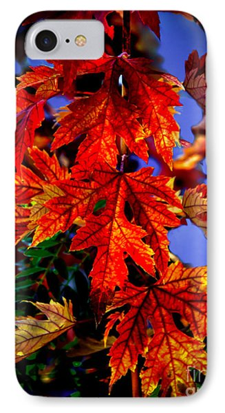 Maple Leaves Phone Case by Robert Bales