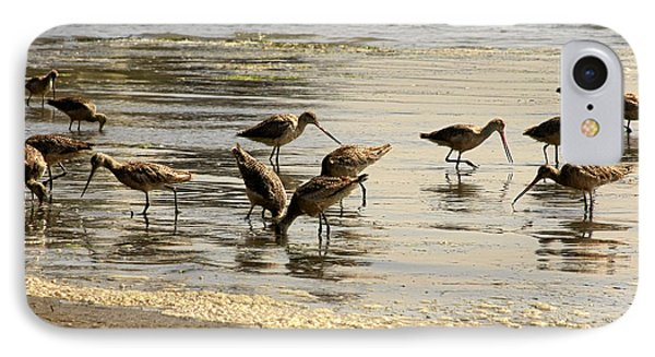 Marbled Godwit Birds At Sunset IPhone Case by Christine Till