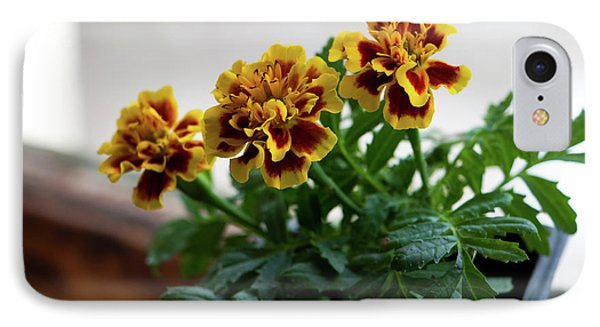 Marigold In Winter Phone Case by Jeff Severson