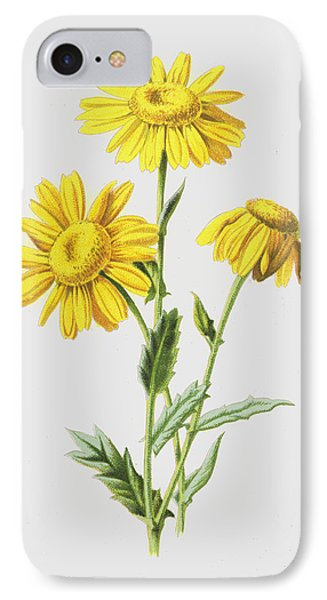 Marigolds IPhone Case by Frederick Edward Hulme